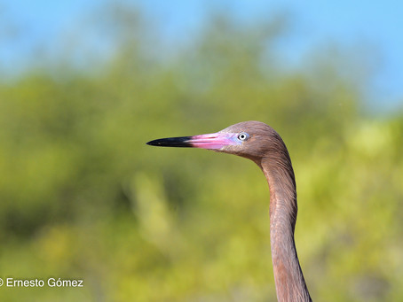 Pronatura Noreste en el Congreso para el Estudio y Conservación de las Aves en México