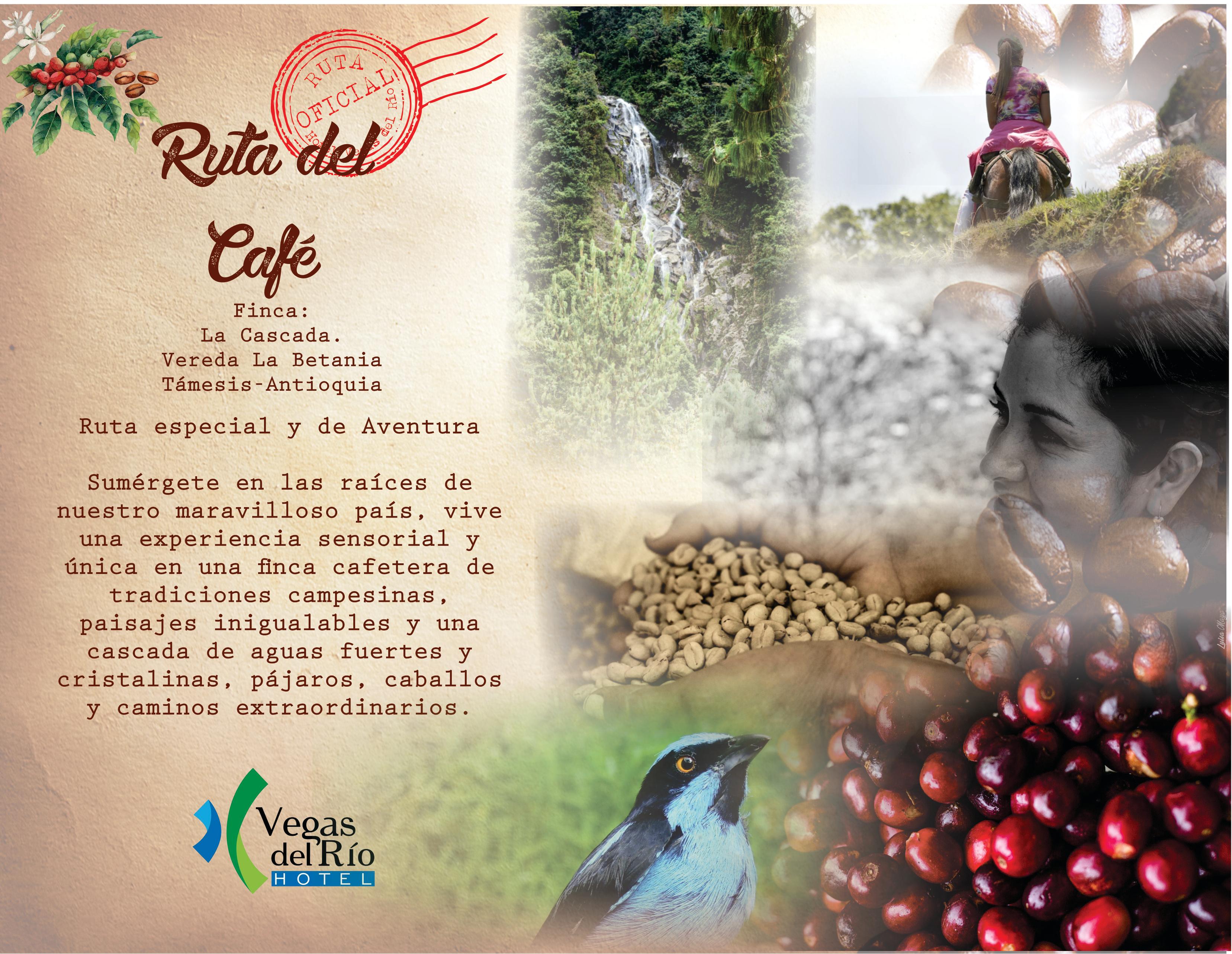 ruta cafe 1