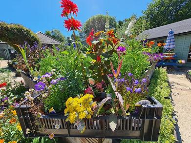 friary - flower box.jpg