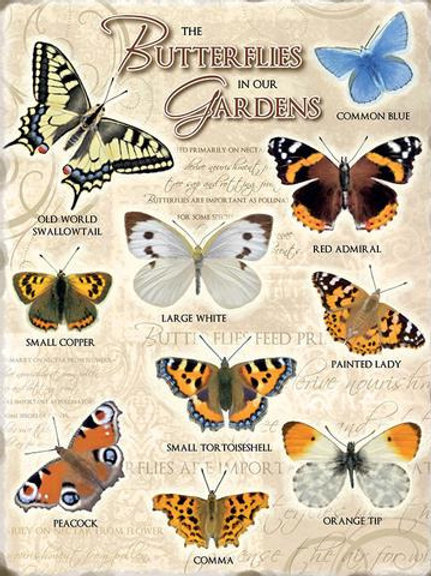 Athelhampton gift shop dorset fridge magnets humour butterflies in our garden