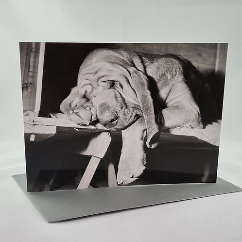 Athelhampton gift shop dorset greetings card and envelope sleeping dog 1960s