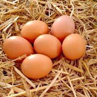 œufs de ferme