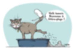 webchat-litiere-AS.jpg