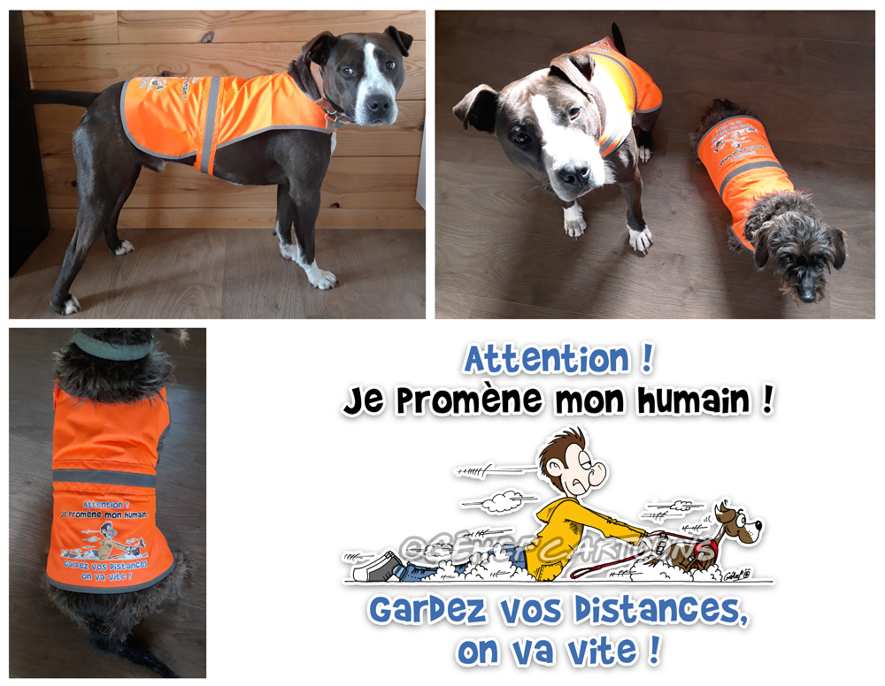web-photos-modeles-manteaux-chiens-09-20