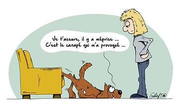 Empêcher chien de monter dans canapé - Educanimo® - Illustration Educanimo®