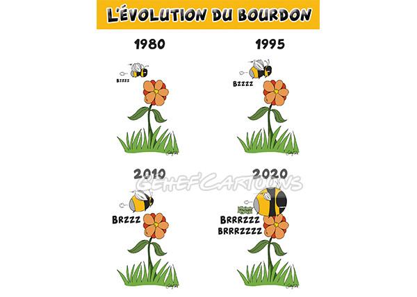 bourdon-evolution.jpg