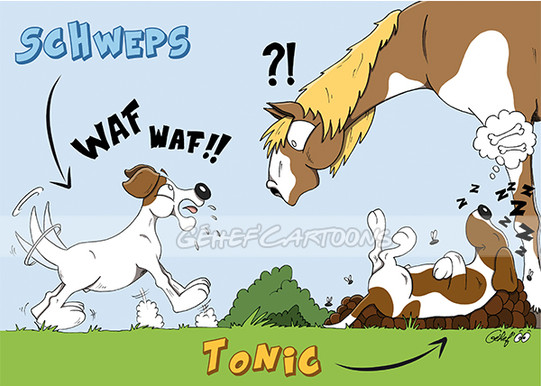 Schweps-et-Tonic.jpg