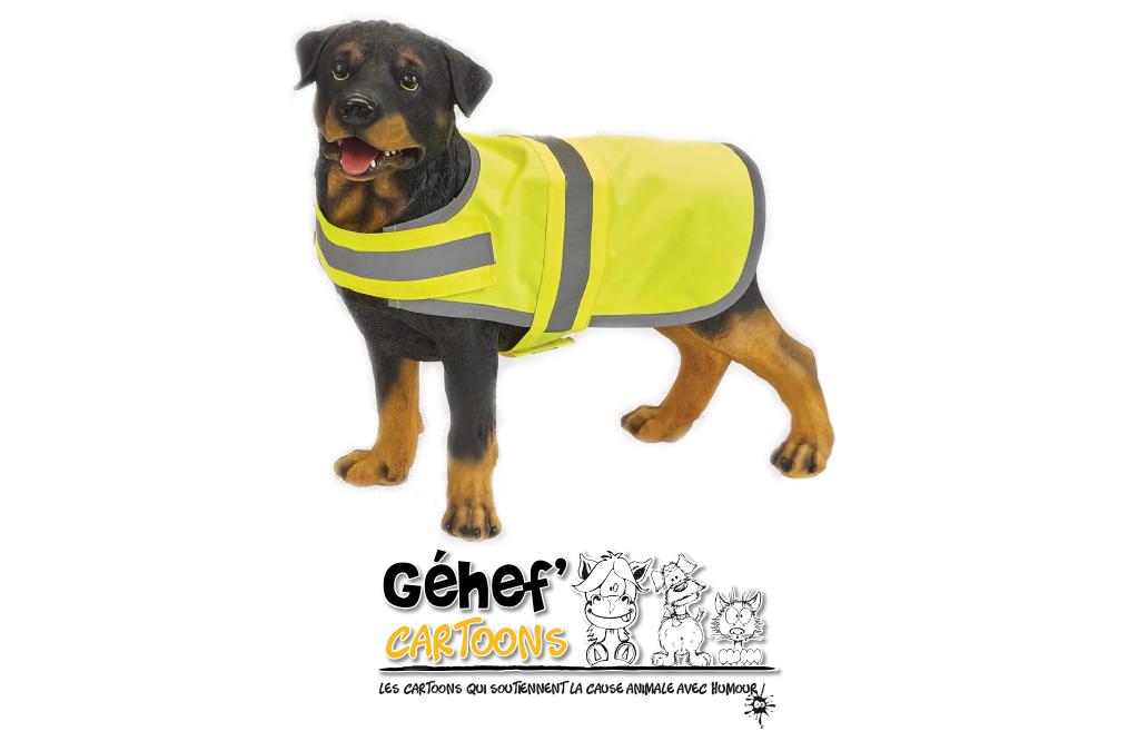veste-chien-HVDW15-jaune-promenadehumain