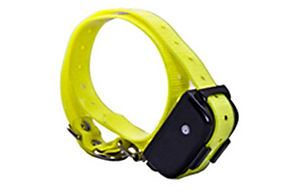 Labrador Training Collar-PET610 (11).jpg