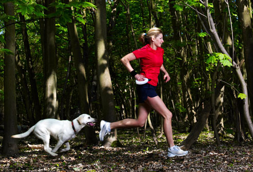 Tips for Teaching Your Dog to Run with You Petdiary Dog Training Collars