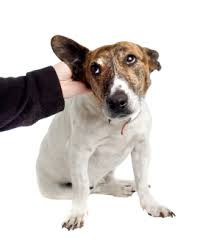 7 Ways Your Dog Talks To You Through Body Language, By Petdiary Dog Training Collars