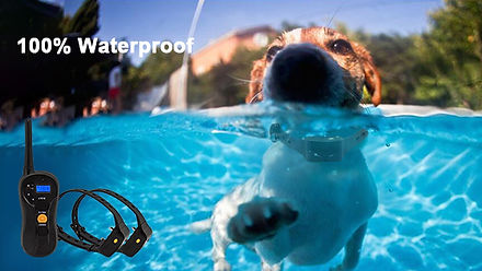 Dog Obedience Training Collar-P620 (7).j
