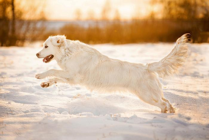 Winter Training Tips for Your Dog Petdiary Dog Training Collars