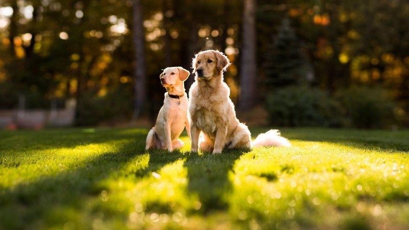 How do you determine the right level of E Collar stimulation for your dog