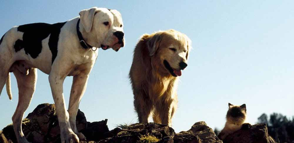 The 12 Best Dog Movies of All Time Petdiary Dog Training Collars