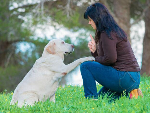 How To Train A Senior Dog?