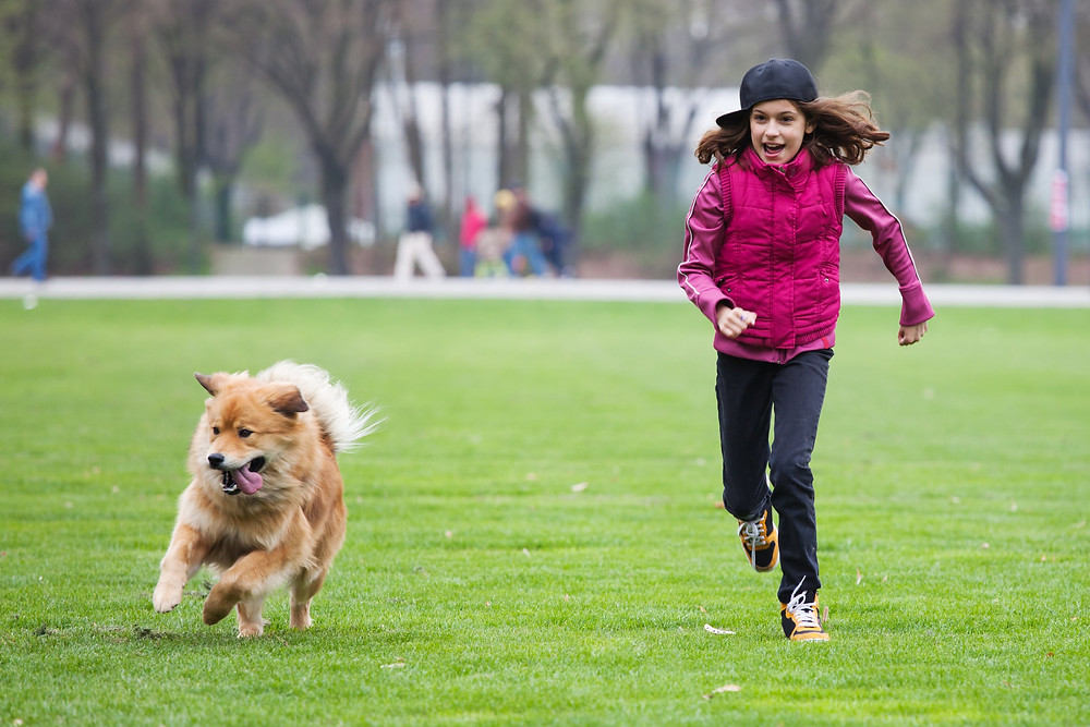 If Your Dog Keeps Running Away, Try These Tips.By Petdiary Dog Training Collars