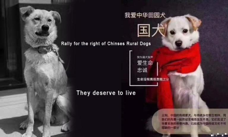 Save Chinese Rural Dog