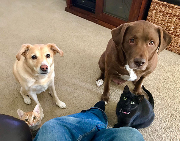 Every time I try to eat in peace, these are the look they give me.