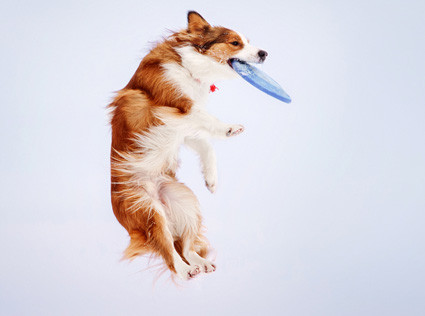 Tips for Teaching Your Dog to Catch a Frisbee Petdiary Dog Training Collars