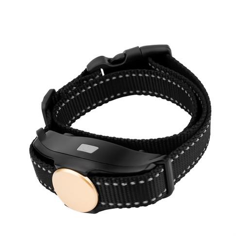 Dog Training With Collar-P320 (3).jpg