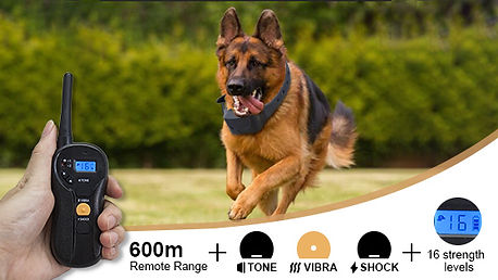 Dog Obedience Training Collar-P620 (8).j