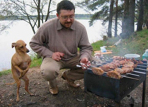 I am being a good boy to see if I can get some of that BBQ chicken.