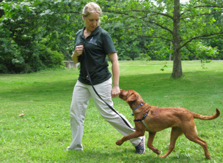 12 Reasons to Use Positive Dog Training Methods