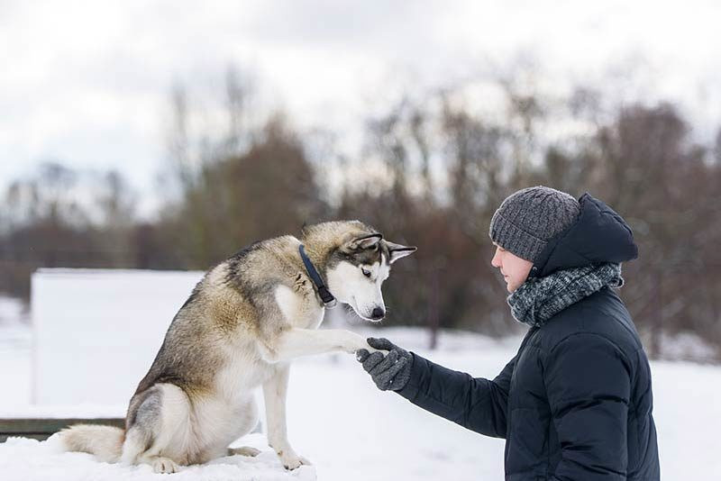 Dogs putting on weight in winter due to owners' shirking walks in bad weather, study finds