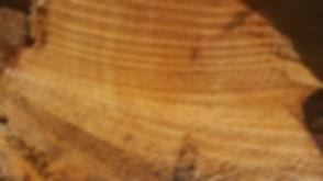 tree-1428082_960_720.jpg