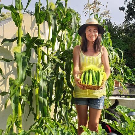 Grow baby Corn 'Snobaby'