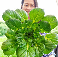 Asian Vegetables/Chinese greens