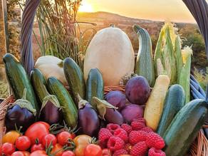 Farewell Summer Harvest!