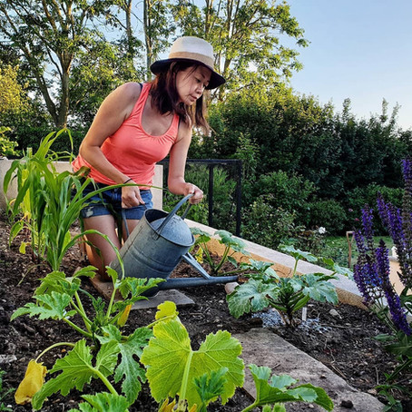 Beginners Guide to Growing Courgettes and Summer Squash