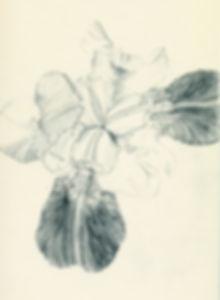 birdpaula art