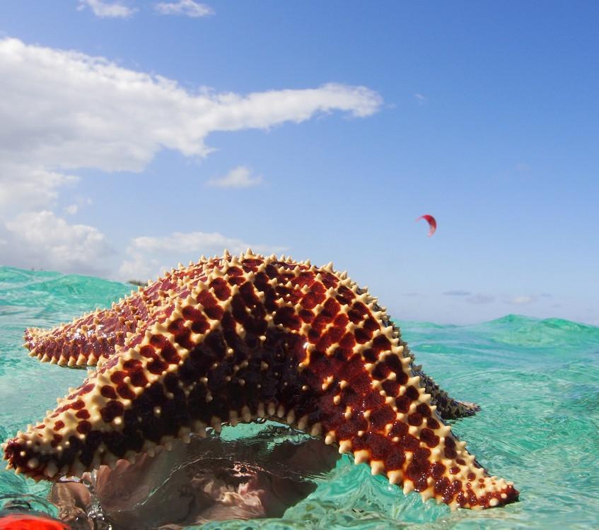 Stingray City and Starfish Snorkel