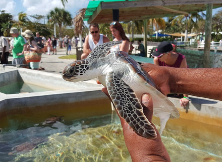 Turtle Centre in Grand Cayman