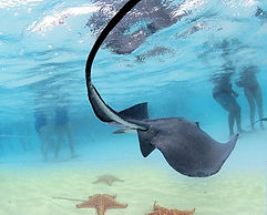 Stingray Cityad Starfish Point tours in Grand Cayman