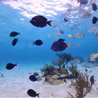 Reef snorkel in Grand Cayman.JPG