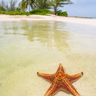 Starfish under the clear Caribbean water