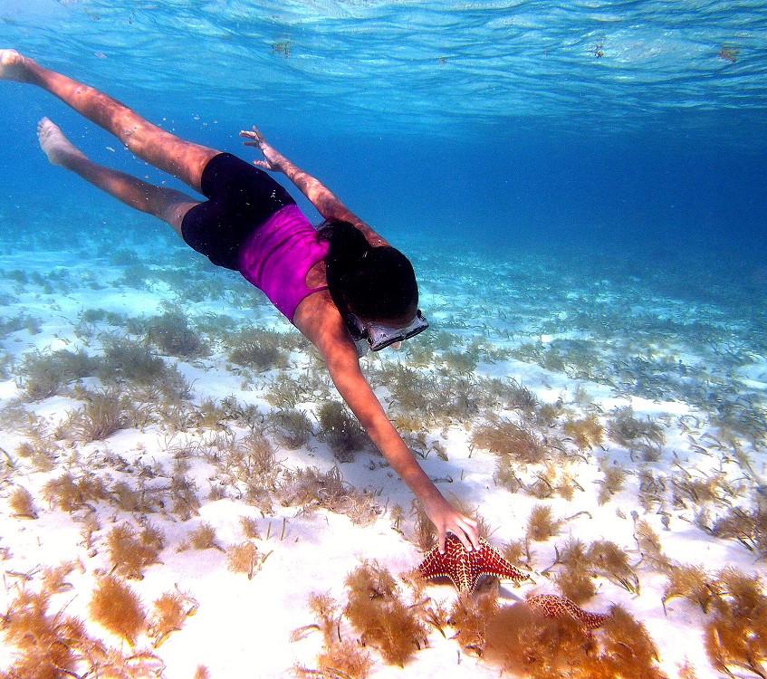 Best Starfish Snorkel