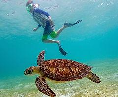 Cayman Turtle Lagoon snorkel Tour 1.jpg