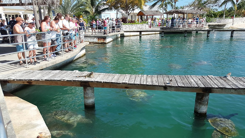 Visitors at the Turtle Centre