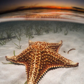 Sunset Starfish .jpg