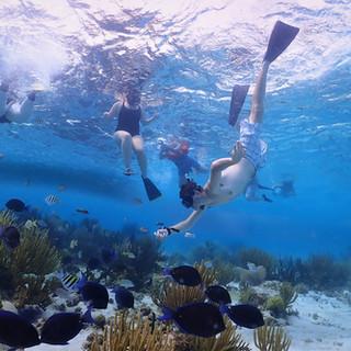 Coral Garden - Grand Cayman - Stingray C