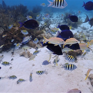 Barrier reef snorkel in Grand Cayman 2.j