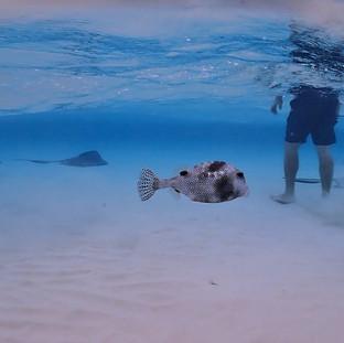 Stingray and Shellfish in Grand Cayman.J