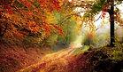 road-1072823_960_720.jpg