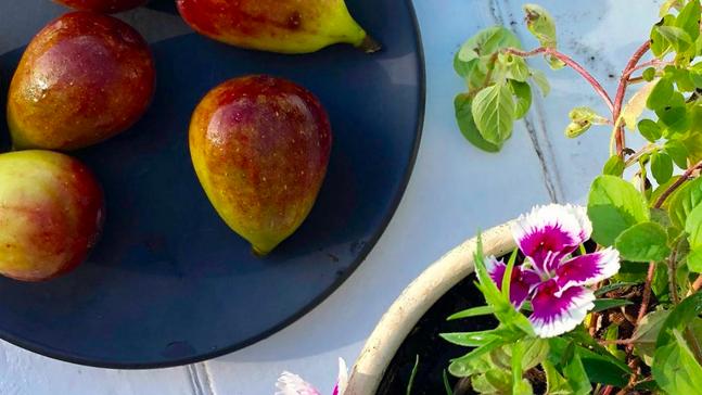 veganmegan figs.png