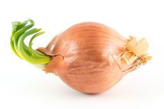 sideways-onion-white-single-background-53405861.jpg